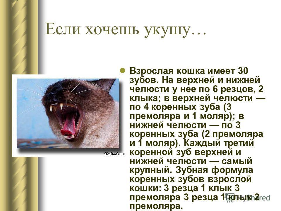 Если хочешь укушу… Взрослая кошка имеет 30 зубов. На верхней и нижней челюсти у нее по 6 резцов, 2 клыка; в верхней челюсти по 4 коренных зуба (3 премоляра и 1 моляр); в нижней челюсти по 3 коренных зуба (2 премоляра и 1 моляр). Каждый третий коренно