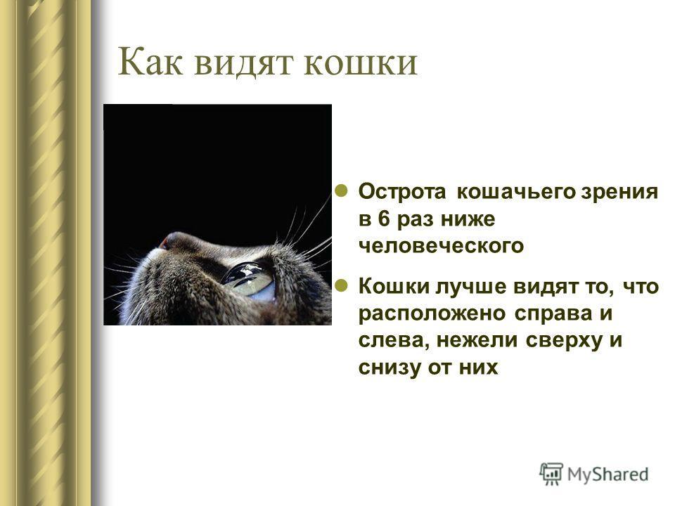 Как видят кошки Острота кошачьего зрения в 6 раз ниже человеческого Кошки лучше видят то, что расположено справа и слева, нежели сверху и снизу от них