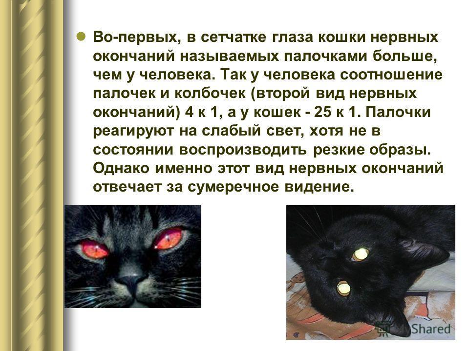 Во-первых, в сетчатке глаза кошки нервных окончаний называемых палочками больше, чем у человека. Так у человека соотношение палочек и колбочек (второй вид нервных окончаний) 4 к 1, а у кошек - 25 к 1. Палочки реагируют на слабый свет, хотя не в состо