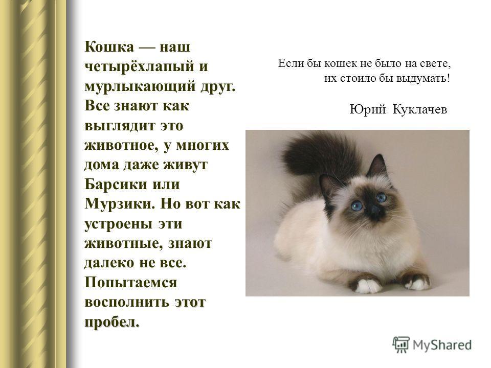 этот пробел. Кошка наш четырёхлапый и мурлыкающий друг. Все знают как выглядит это животное, у многих дома даже живут Барсики или Мурзики. Но вот как устроены эти животные, знают далеко не все. Попытаемся восполнить этот пробел. Если бы кошек не было