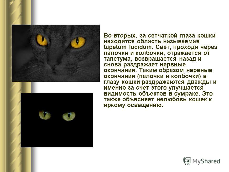 Во-вторых, за сетчаткой глаза кошки находится область называемая tapetum lucidum. Свет, проходя через палочки и колбочки, отражается от тапетума, возвращается назад и снова раздражает нервные окончания. Таким образом нервные окончания (палочки и колб
