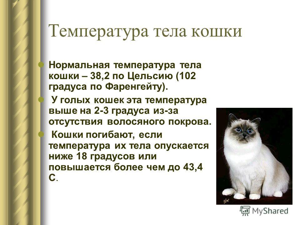 Нормальная температура тела кошки – 38,2 по Цельсию (102 градуса по Фаренгейту). У голых кошек эта температура выше на 2-3 градуса из-за отсутствия волосяного покрова. Кошки погибают, если температура их тела опускается ниже 18 градусов или повышаетс