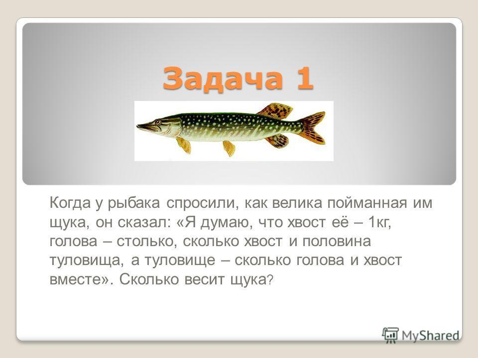 Задача 1 Когда у рыбака спросили, как велика пойманная им щука, он сказал: «Я думаю, что хвост её – 1кг, голова – столько, сколько хвост и половина туловища, а туловище – сколько голова и хвост вместе». Сколько весит щука ?
