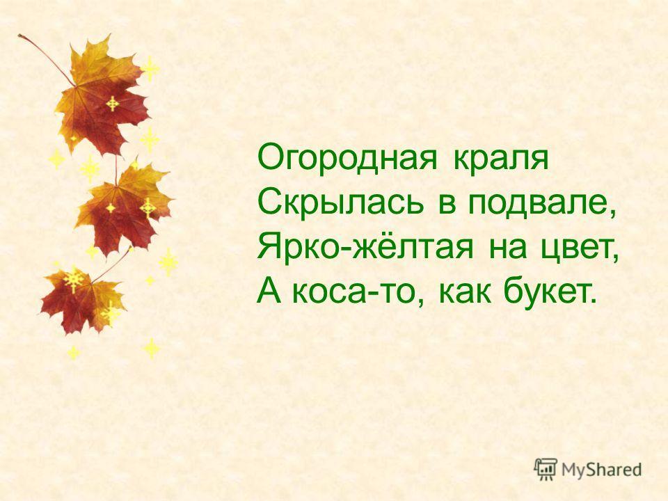 Огородная краля Скрылась в подвале, Ярко-жёлтая на цвет, А коса-то, как букет.