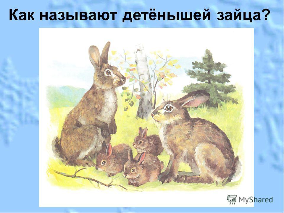 Как называют детёнышей зайца?