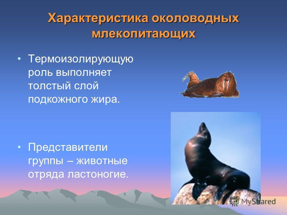 Характеристика околоводных млекопитающих Термоизолирующую роль выполняет толстый слой подкожного жира. Представители группы – животные отряда ластоногие.