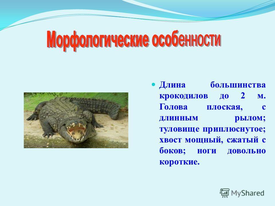 Длина большинства крокодилов до 2 м. Голова плоская, с длинным рылом; туловище приплюснутое; хвост мощный, сжатый с боков; ноги довольно короткие.