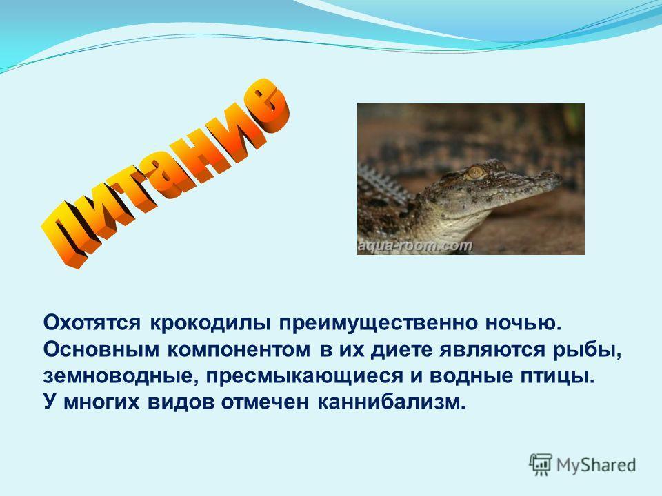 Охотятся крокодилы преимущественно ночью. Основным компонентом в их диете являются рыбы, земноводные, пресмыкающиеся и водные птицы. У многих видов отмечен каннибализм.