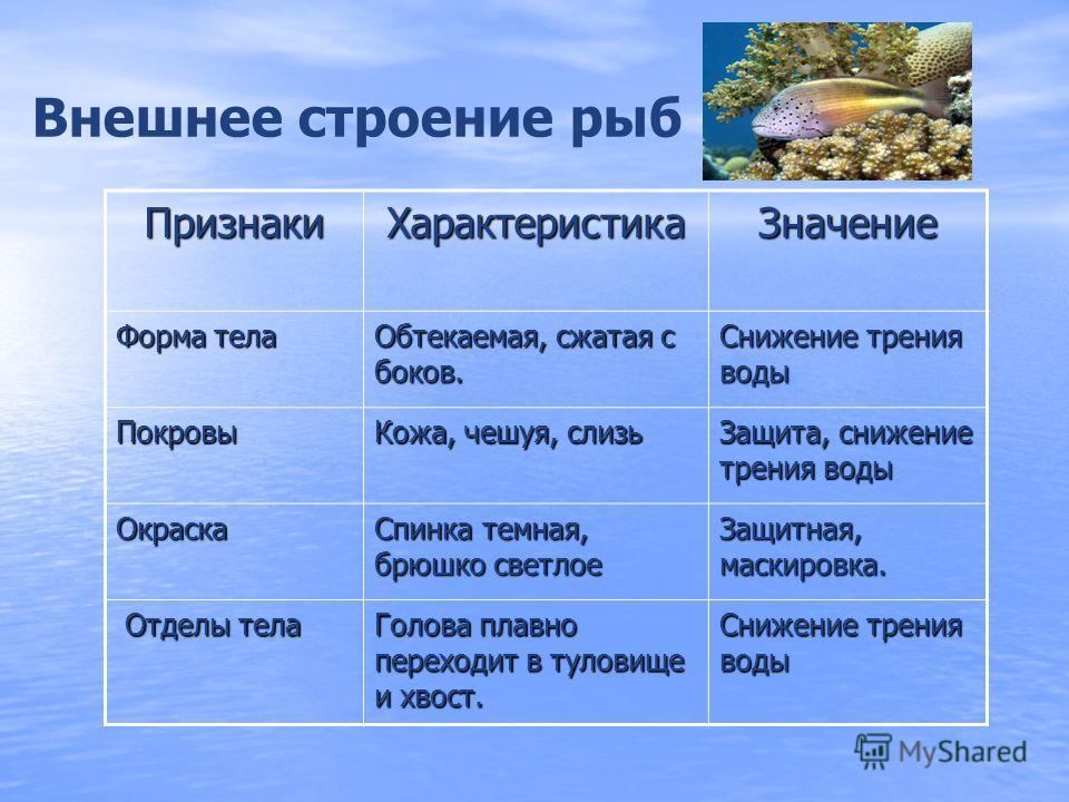 Приспособленность рыб к факторам водной среды. Факторы водной средыПриспособления к факторам среды Большая плотность водыОбтекаемая форма тела, слизь, черепитчатое расположение чешуи, плавники ПрозрачностьЗащитная окраска; глаза органы зрения Способн