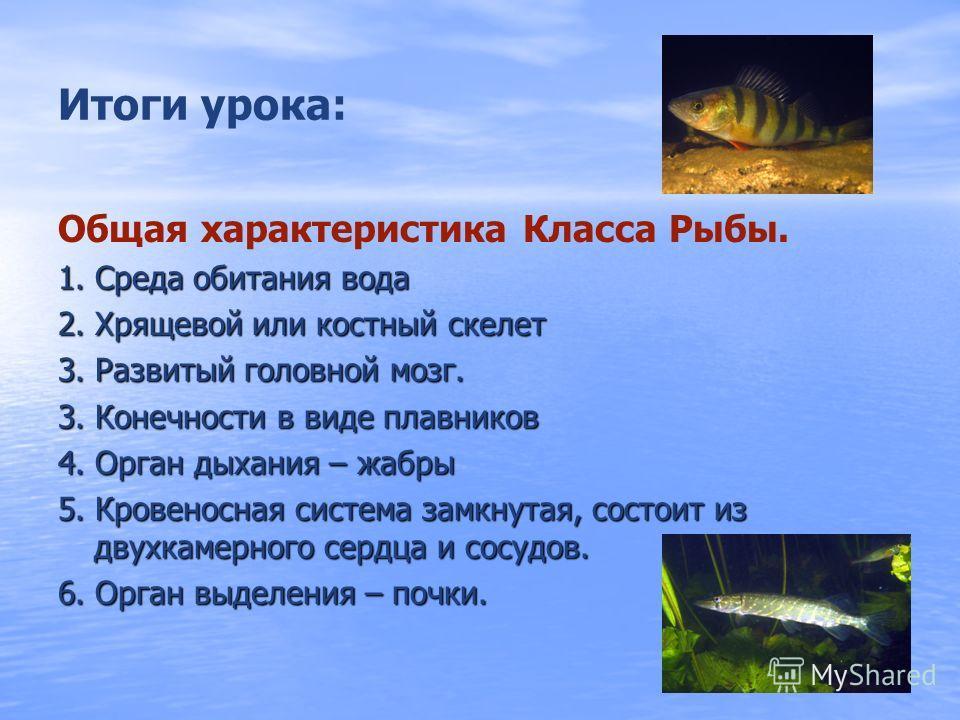 Органы чувств рыб ПризнакиОрганЗначение Орган зрения ГлазаОбеспечивает зрение на близком расстоянии Орган обоняния НоздриВосприятие запахов растворенных в воде Органы боковой линии Каналы лежащие под чешуей Чувство потоков воды, различение предметов,