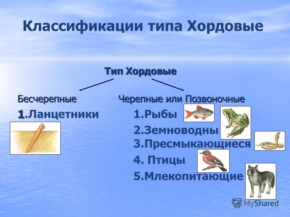 Цели урока: Изучить: 1. 1. Особенности внешнего и внутреннего строения рыб в связи со средой обитания Уметь 1. 1. Самостоятельно определять признаки типа Хордовые. 2. 2. Называть прогрессивные признаки класса Рыбы
