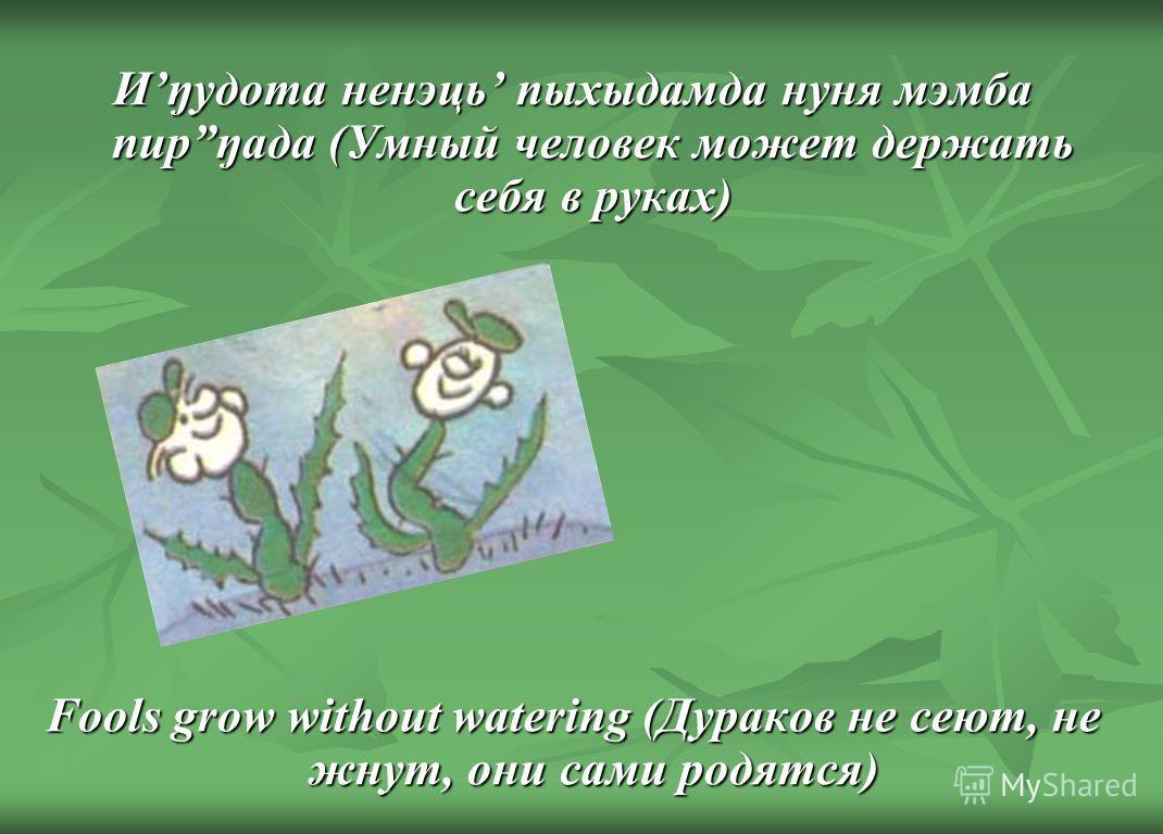 Иŋудота ненэць пыхыдамда нуня мэмба пирŋада (Умный человек может держать себя в руках) Fools grow without watering (Дураков не сеют, не жнут, они сами родятся)