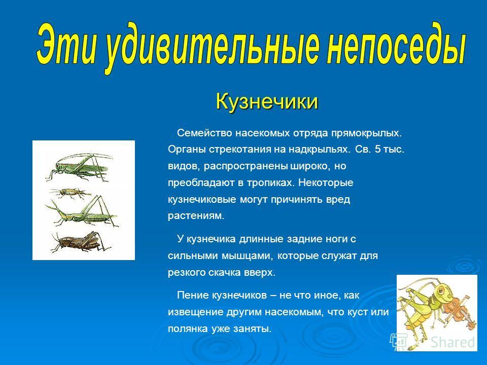 Кузнечики Кузнечики Семейство насекомых отряда прямокрылых. Органы стрекотания на надкрыльях. Св. 5 тыс. видов, распространены широко, но преобладают в тропиках. Некоторые кузнечиковые могут причинять вред растениям. У кузнечика длинные задние ноги с