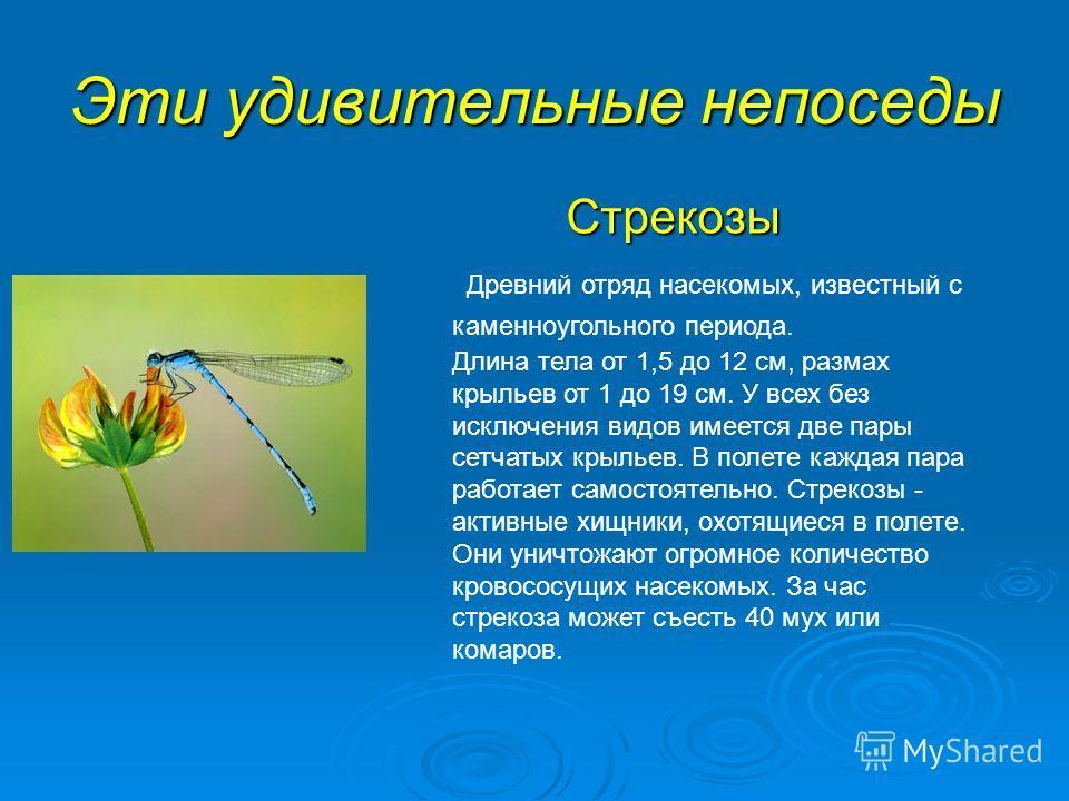 Эти удивительные непоседы Стрекозы Древний отряд насекомых, известный с каменноугольного периода. Длина тела от 1,5 до 12 см, размах крыльев от 1 до 19 см. У всех без исключения видов имеется две пары сетчатых крыльев. В полете каждая пара работает с