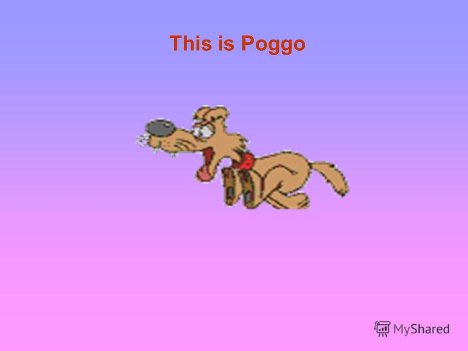 This is Poggo