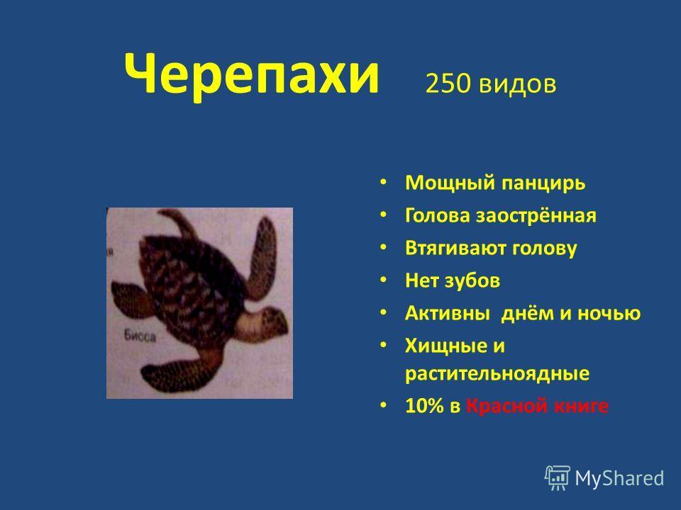 Черепахи 250 видов Мощный панцирь Голова заострённая Втягивают голову Нет зубов Активны днём и ночью Хищные и растительноядные 10% в Красной книге