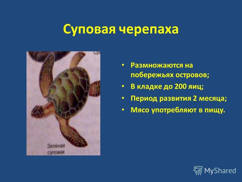 Суповая черепаха Размножаются на побережьях островов; В кладке до 200 яиц; Период развития 2 месяца; Мясо употребляют в пищу.