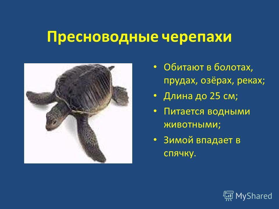 Пресноводные черепахи Обитают в болотах, прудах, озёрах, реках; Длина до 25 см; Питается водными животными; Зимой впадает в спячку.