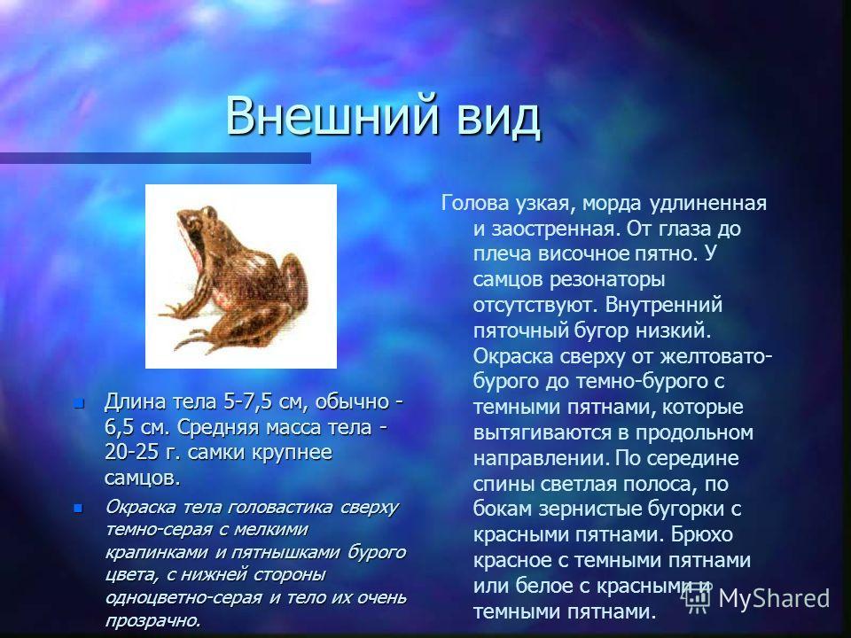 Внешний вид n Длина тела 5-7,5 см, обычно - 6,5 см. Средняя масса тела - 20-25 г. самки крупнее самцов. n Окраска тела головастика сверху темно-серая с мелкими крапинками и пятнышками бурого цвета, с нижней стороны одноцветно-серая и тело их очень пр