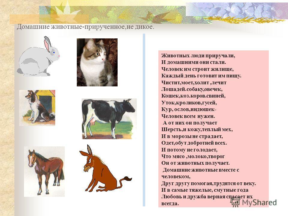 Животных люди приручали, И домашними они стали. Человек им строит жилище, Каждый день готовит им пищу. Чистит,моет,холит,лечит Лошадей.собаку,овечек, Кошек,коз.коров.свиней, Уток,кроликов,гусей, Кур, ослов,индюшек- Человек всем нужен. А от них он пол