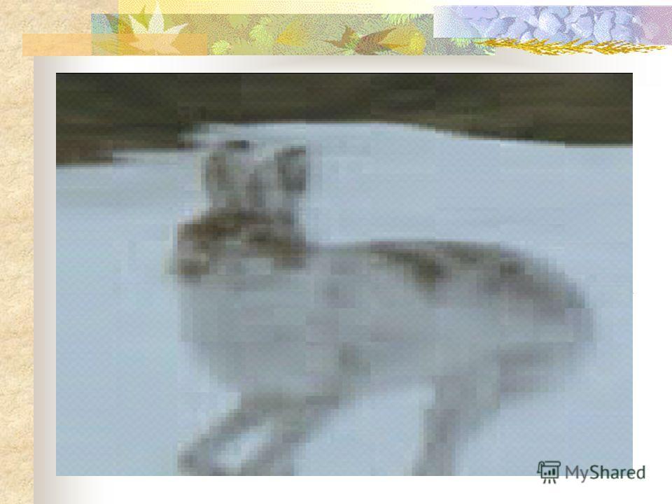 Упр. «Угадай кто это?» Он живет в лесу. У него есть туловище,голова,уши,короткий хвост. Тело покрыто шерстью,которая бывает то белой,то серой. Живет по кусточком. Кто же он?