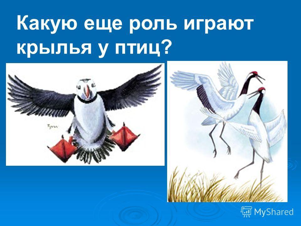 Какую еще роль играют крылья у птиц?