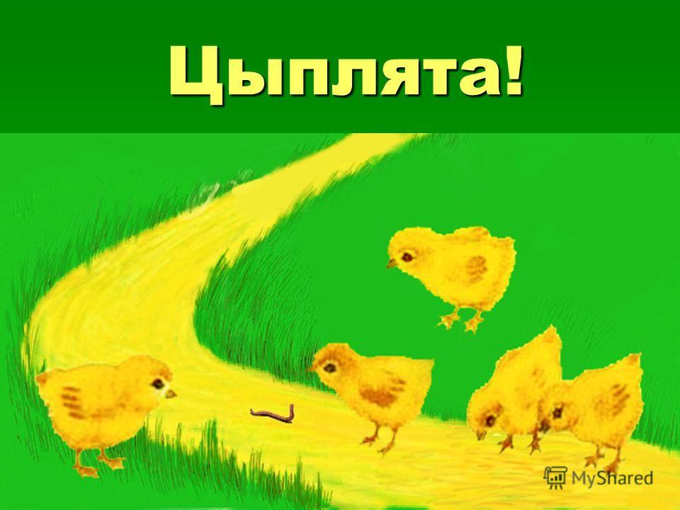 Цыплята! А теперь всё по-порядку Загадаю вам загадку: Жёлтые комочки. Тёплые как вата, Бегают за квочкой Кто это?