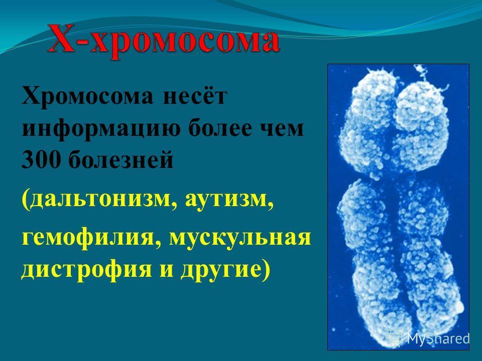 Хромосома несёт информацию более чем 300 болезней (дальтонизм, аутизм, гемофилия, мускульная дистрофия и другие)
