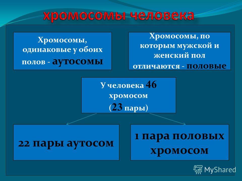Хромосомы, одинаковые у обоих полов - аутосомы Хромосомы, по которым мужской и женский пол отличаются - половые У человека 46 хромосом ( 23 пары) 22 пары аутосом 1 пара половых хромосом