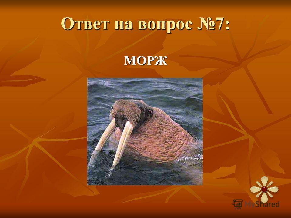 Ответ на вопрос 7: МОРЖ