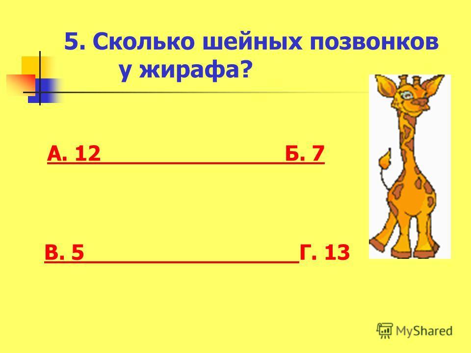 5. Сколько шейных позвонков у жирафа? А. 12 Б. 7 В. 5 В. 5 Г. 13