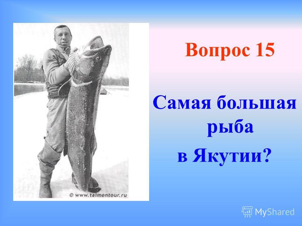 Вопрос 14 Какой самый твердый дорогостоящий минерал в Якутии?