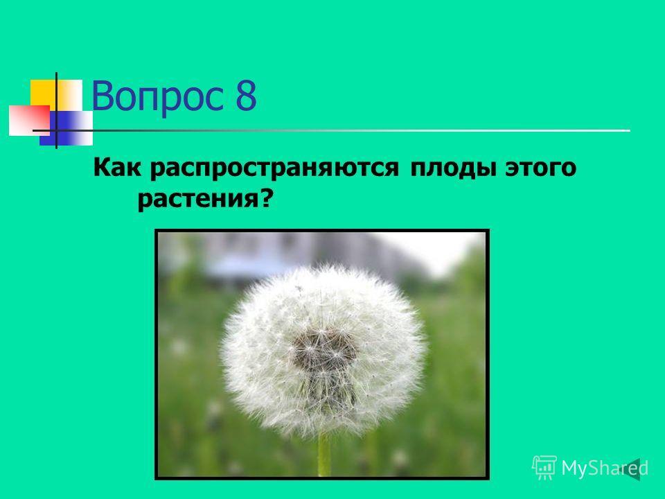 Вопрос 8 Как распространяются плоды этого растения?