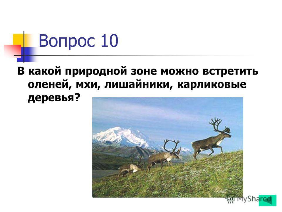 Вопрос 10 В какой природной зоне можно встретить оленей, мхи, лишайники, карликовые деревья?