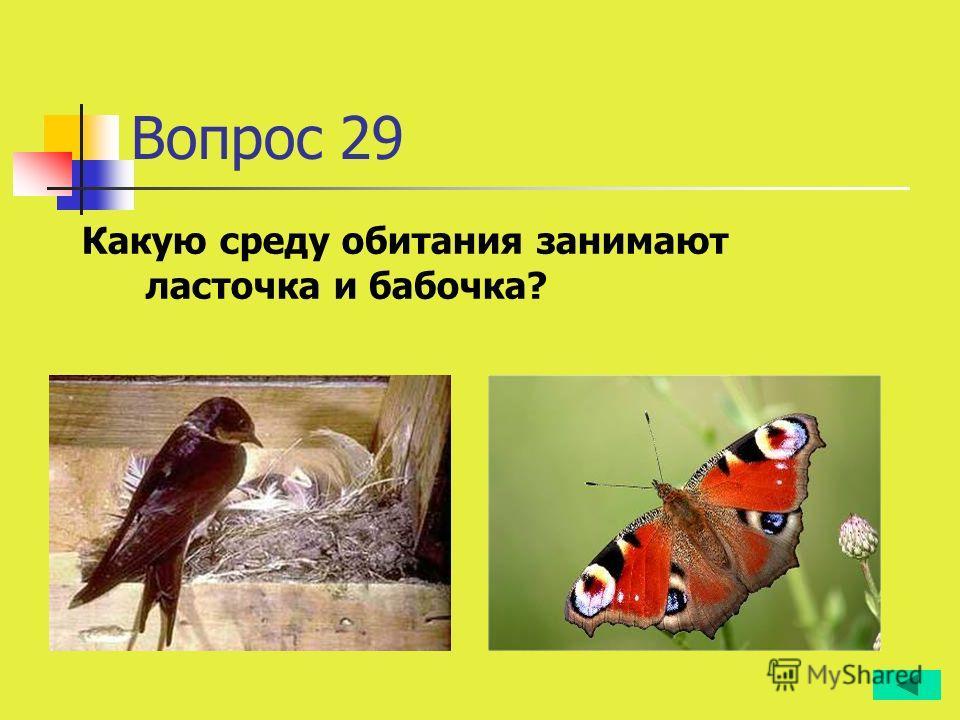 Вопрос 29 Какую среду обитания занимают ласточка и бабочка?