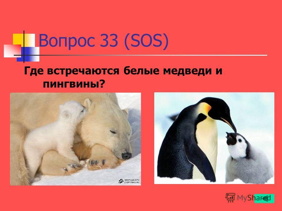 Вопрос 33 (SOS) Где встречаются белые медведи и пингвины?