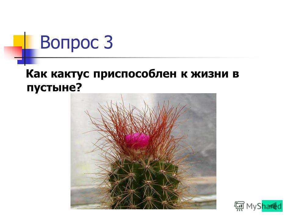 Вопрос 3 Как кактус приспособлен к жизни в пустыне?