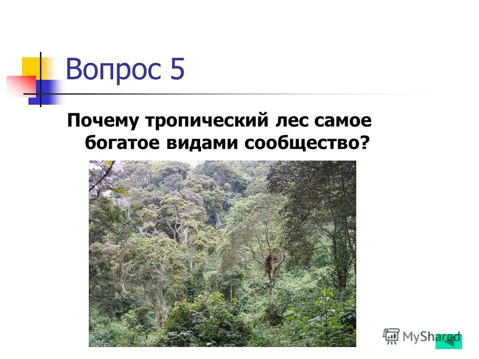 Вопрос 5 Почему тропический лес самое богатое видами сообщество?