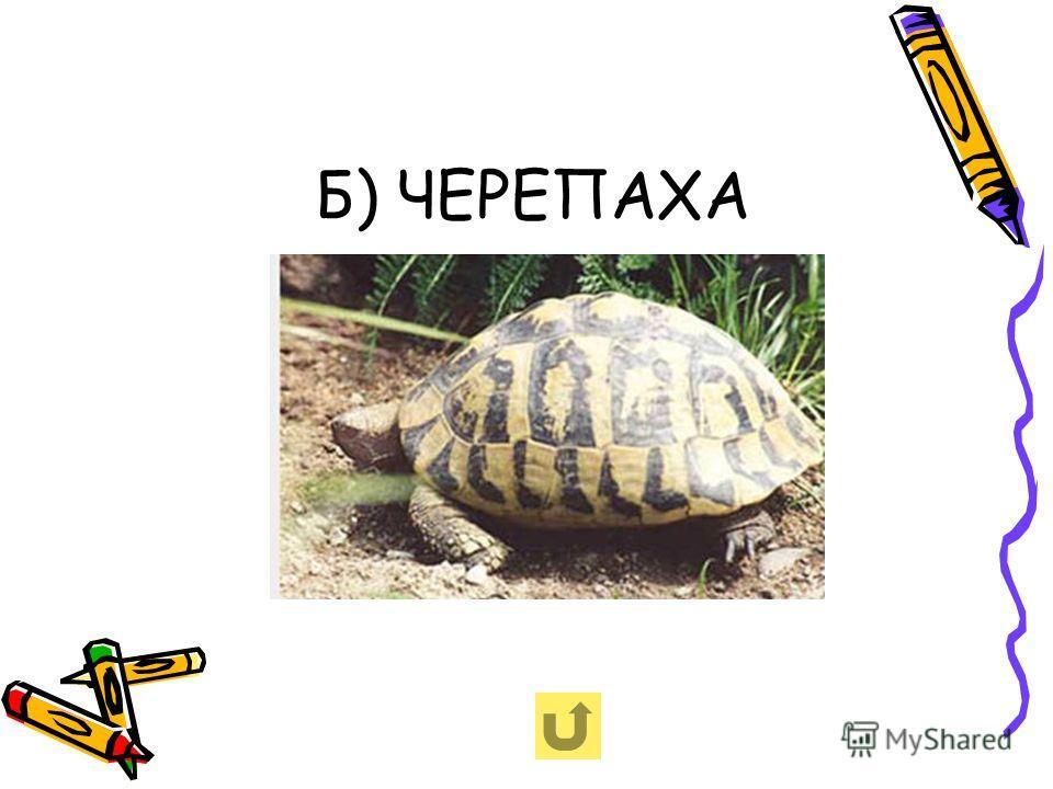 Б) ЧЕРЕПАХА