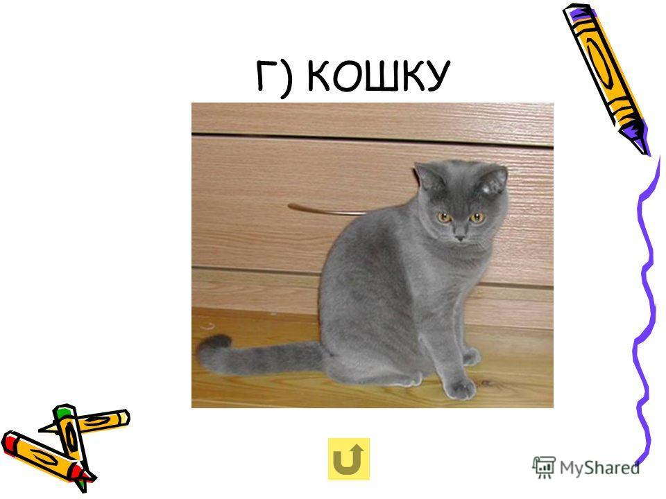 Г) КОШКУ