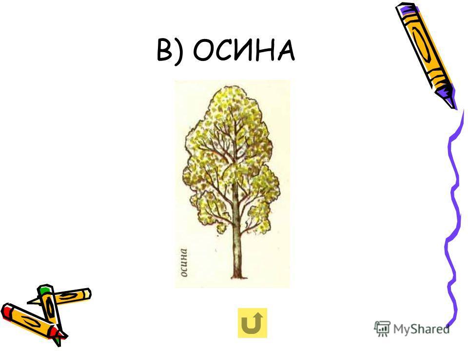 В) ОСИНА