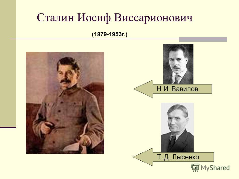Сталин Иосиф Виссарионович Н.И. Вавилов Т. Д. Лысенко (1879-1953г.)