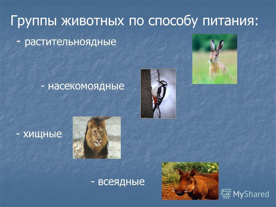 Группы животных по способу питания: - растительноядные - насекомоядные - хищные - всеядные