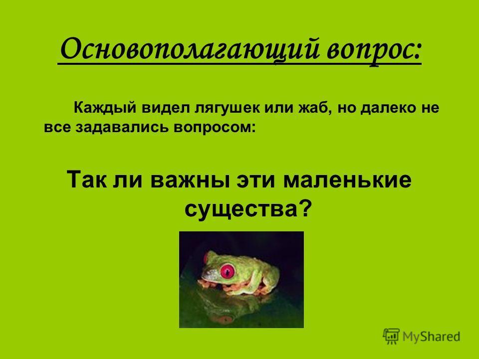 Основополагающий вопрос: Каждый видел лягушек или жаб, но далеко не все задавались вопросом: Так ли важны эти маленькие существа?