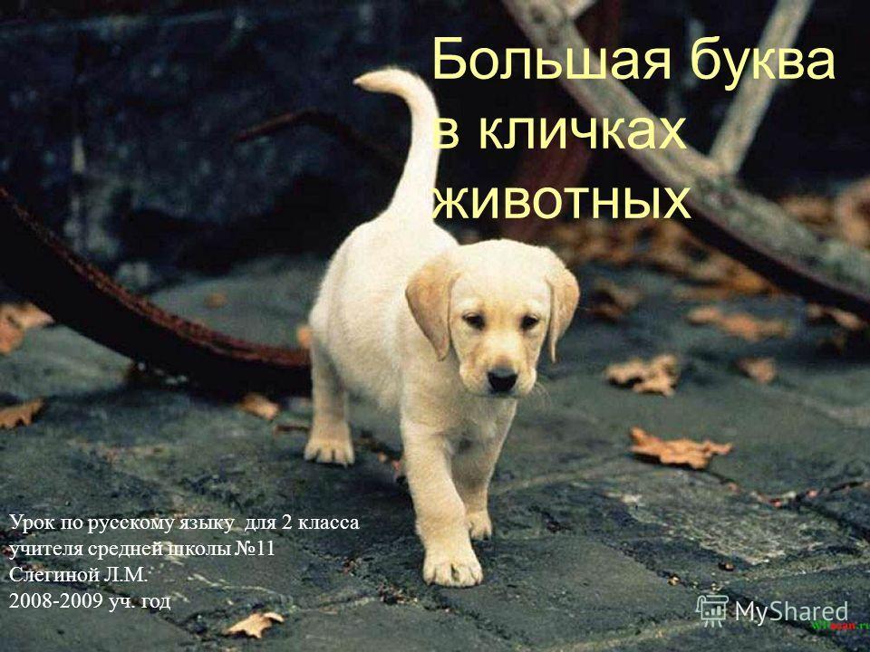 Большая буква в кличках животных Урок по русскому языку для 2 класса учителя средней школы 11 Слегиной Л.М. 2008-2009 уч. год