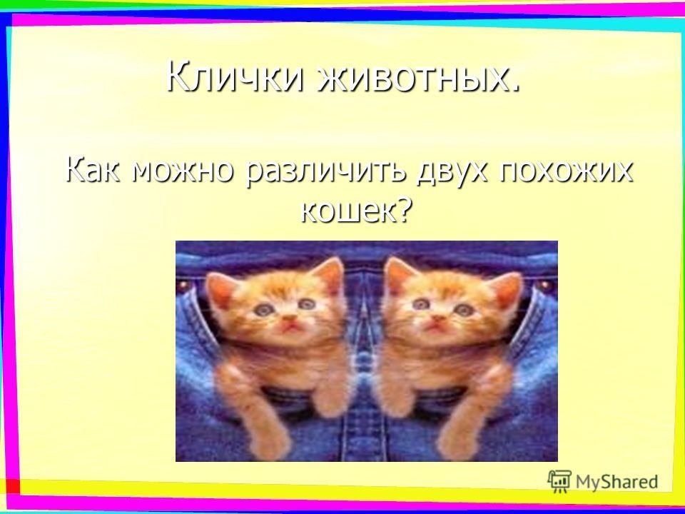 Клички животных. Как можно различить двух похожих кошек? Как можно различить двух похожих кошек?