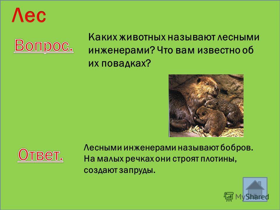 Угадай животное Изящное, грациозное животное величиной с кошку. Питается мелкими животными: белками, птицами, грызунами. Имеет острые когти и ловко лазает по деревьям, стремительно преследуя добычу или нападая из засады. Живет в дуплах деревьев, в ро