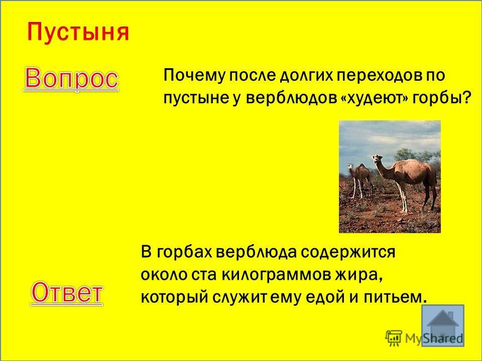 Кто лишний? верблюд джейран варан лось суслик