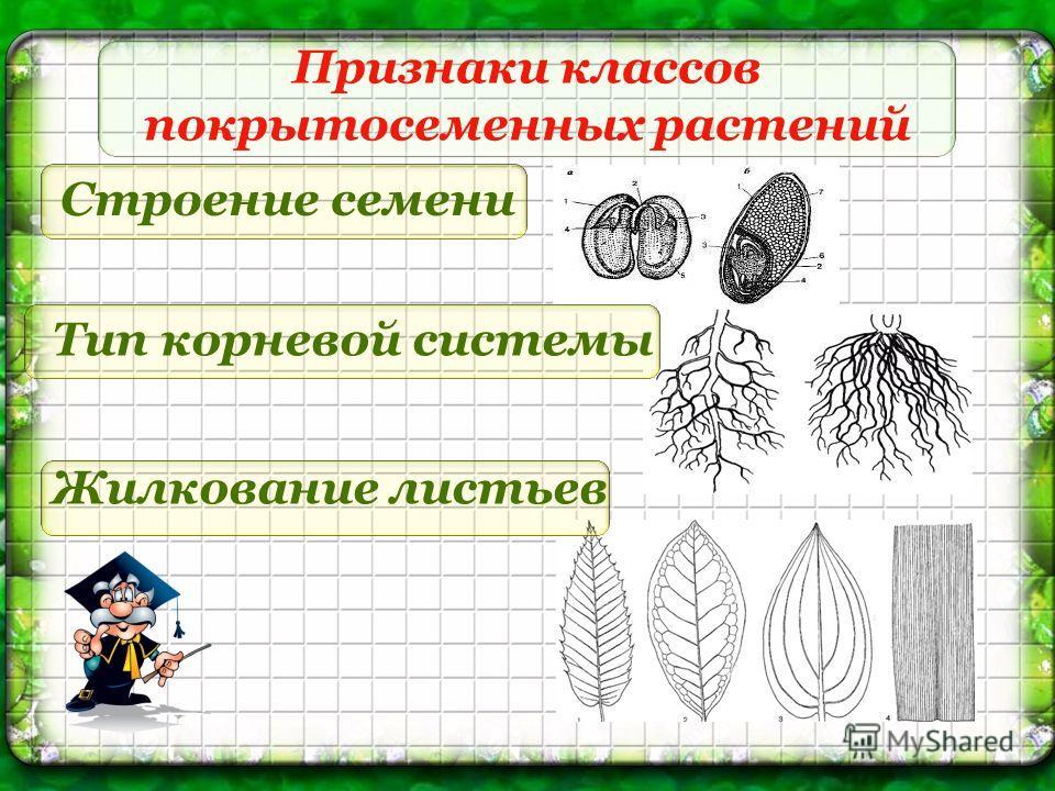 Признаки классов покрытосеменных растений Строение семени Жилкование листьев Тип корневой системы