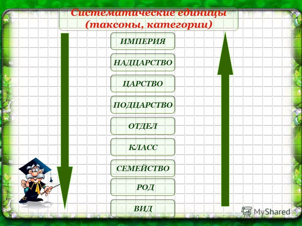 Систематические единицы (таксоны, категории) СЕМЕЙСТВО РОД ВИД КЛАСС ОТДЕЛ ПОДЦАРСТВО НАДЦАРСТВО ЦАРСТВО ИМПЕРИЯ